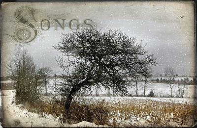 Photograph - Winter Songs by Stephanie Calhoun