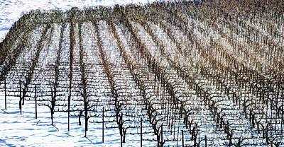 Photograph - Winter Soter Vineyards by Jerry Sodorff