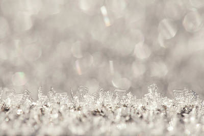 Photograph - Winter Sparkle by Yvette Van Teeffelen