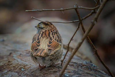 Abstract Stripe Patterns - Winter Sparrow III by Trent Garverick