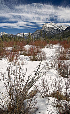 Dogwood Lake Photograph - Winter Spice by Royce Howland