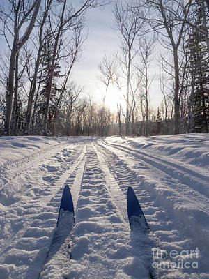 Winter Sport X-country Skis In Sunny Forest Tracks Art Print