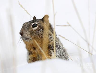 Stellar Interstellar - Winter Squirrel by Dennis Hammer