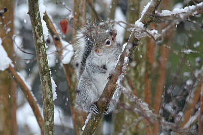 Photograph - Winter Squirrel by Trina Ansel