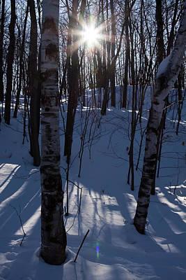 Photograph - Winter Star by Tatiana Travelways