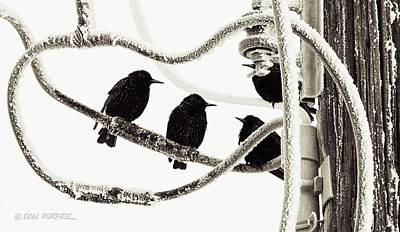 Photograph - Winter Starlings by Don Durfee