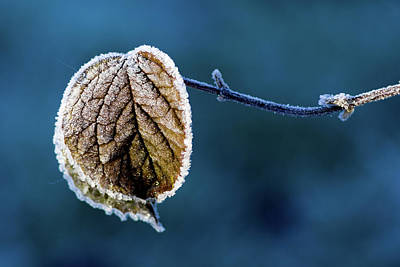 Icy Leaves Photograph - Winter  by Stelios Kleanthous