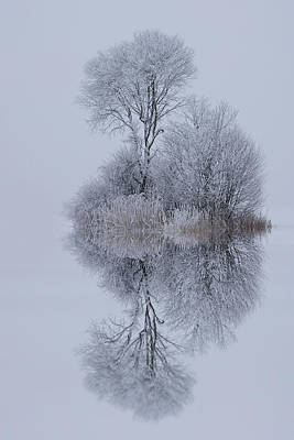 Frost Photograph - Winter Stillness by Norbert Maier