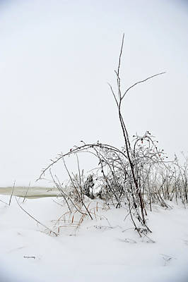 Photograph - Winter Stillness by Randi Grace Nilsberg