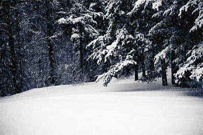 Christmas Photograph - Winter Storm by Maggie Terlecki
