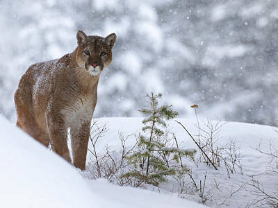 Photograph - Winter Storm by Steve McKinzie