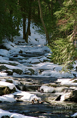 Photograph - Winter Stream by Nicki McManus