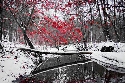 Photograph - Winter Stream by Parker Cunningham