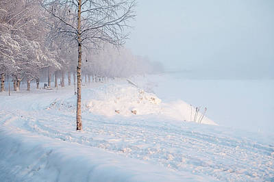 Winter Stroll. Art Print by Angela Aird