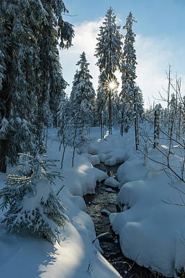 Photograph - winter sun in Upper Harz by Andreas Levi