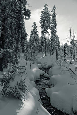 Photograph - winter sun in Upper Harz - monochrome version by Andreas Levi