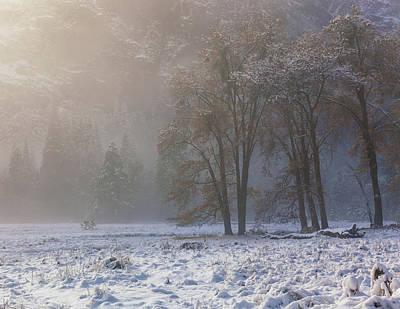 Photograph - Winter Sun by Jonathan Nguyen
