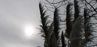 Pampus Photograph - Winter Sun by Valerie Josi