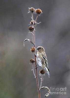 Photograph -  Winter Sunflowers by Elizabeth Winter