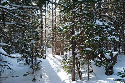Photograph - Winter Sunlit Grove by Cascade Colors