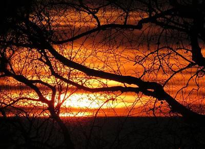 Photograph - Winter Sunrise by Nancy Pauling
