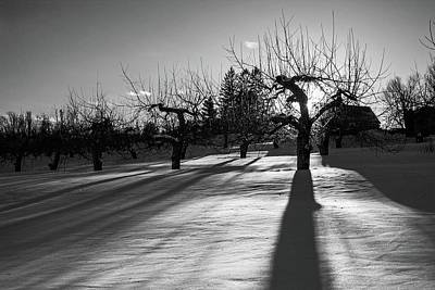Photograph - Winter Sunset At Meadowbrook Orchards Bnw by Michael Saunders