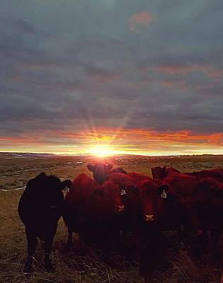 Photograph - Winter Sunset At Night Feed by Amanda Smith