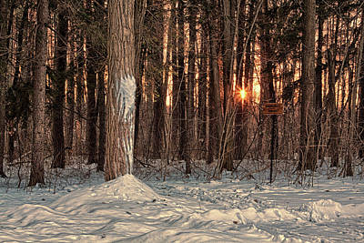Photograph - Winter Sunset In The Forest by Tatiana Travelways