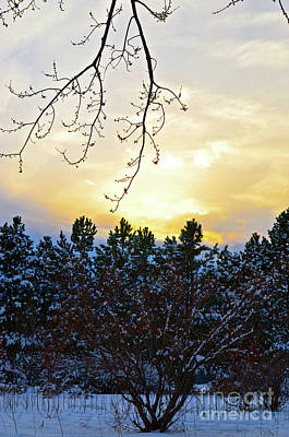 Winter Sunset On The Tree Farm #2 Art Print