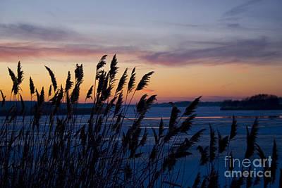 Art Print featuring the photograph Winter Sunset  by Paula Guttilla