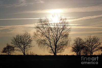 Photograph - Winter Sunset Through Trees On Epsom Downs Surrey Uk by Julia Gavin