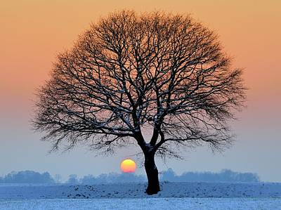 Bare Trees Photograph - Winter Sunset With Silhouette Of Tree by Pierre Hanquin Photographie