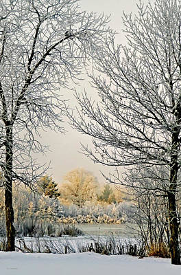 Riverstone Gallery Photograph - Winter Sunshine by Allyson Schwartz