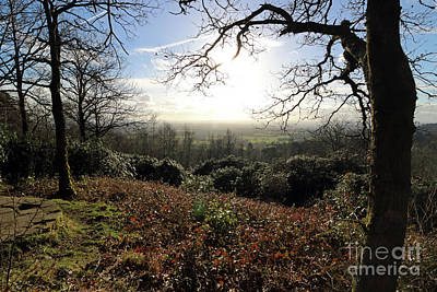 Photograph - Winter Sunshine At Holmbury Hill Surrey by Julia Gavin