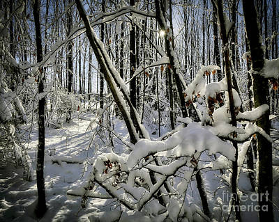 Photograph - Winter Sunshine by Edmund Nagele