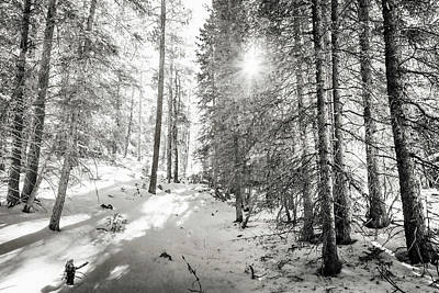 Winter Sunshine Forest Shades Of Gray Art Print