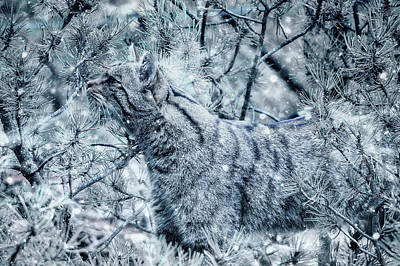 Photograph - Winter Survival by Ractapopulous