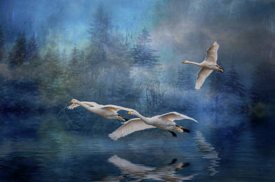 Photograph - Winter Swans by Brian Tarr