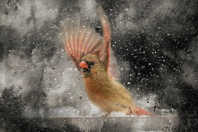 Photograph - Winter Take Off Songbird Art by Jai Johnson