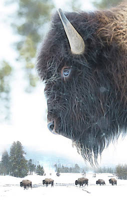 Bison Photograph - Winter Tale by Christian Heeb
