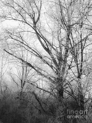 Motography Digital Art - Winter Tales II by Noze P