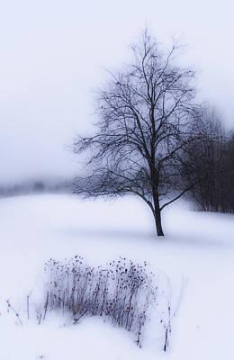 Photograph - Winter by Tammy Wetzel