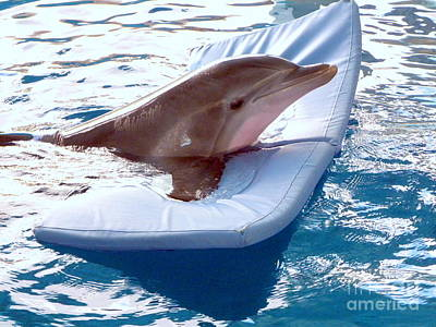 Photograph - Winter The Dolphin by Terri Mills