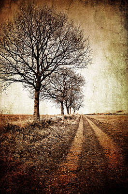 Rural Landscape Photograph - Winter Track With Trees by Meirion Matthias