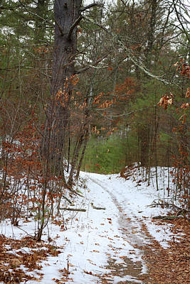 Photograph - Winter Trail At Cow Pond Brook by Mary Bedy