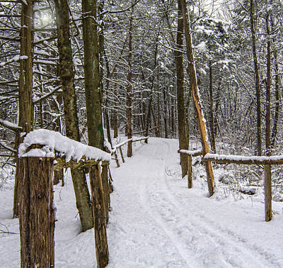 Photograph - Winter Trail Cropped Version by Angelo Marcialis