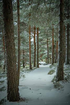 Photograph - Winter Trail  by Henri Irizarri