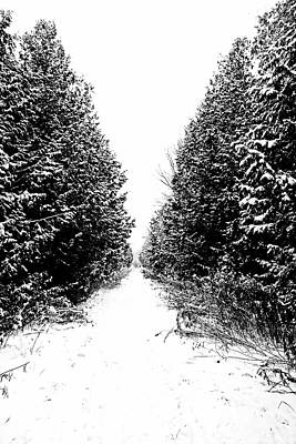 Photograph - Winter Trail In Black And White by Debbie Oppermann