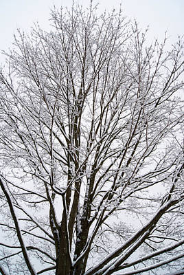 Photograph - Winter Tree    Poster by Margie Avellino