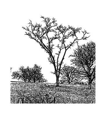 Belinda Landtroop Royalty-Free and Rights-Managed Images - Winter Tree 1 by Belinda Landtroop